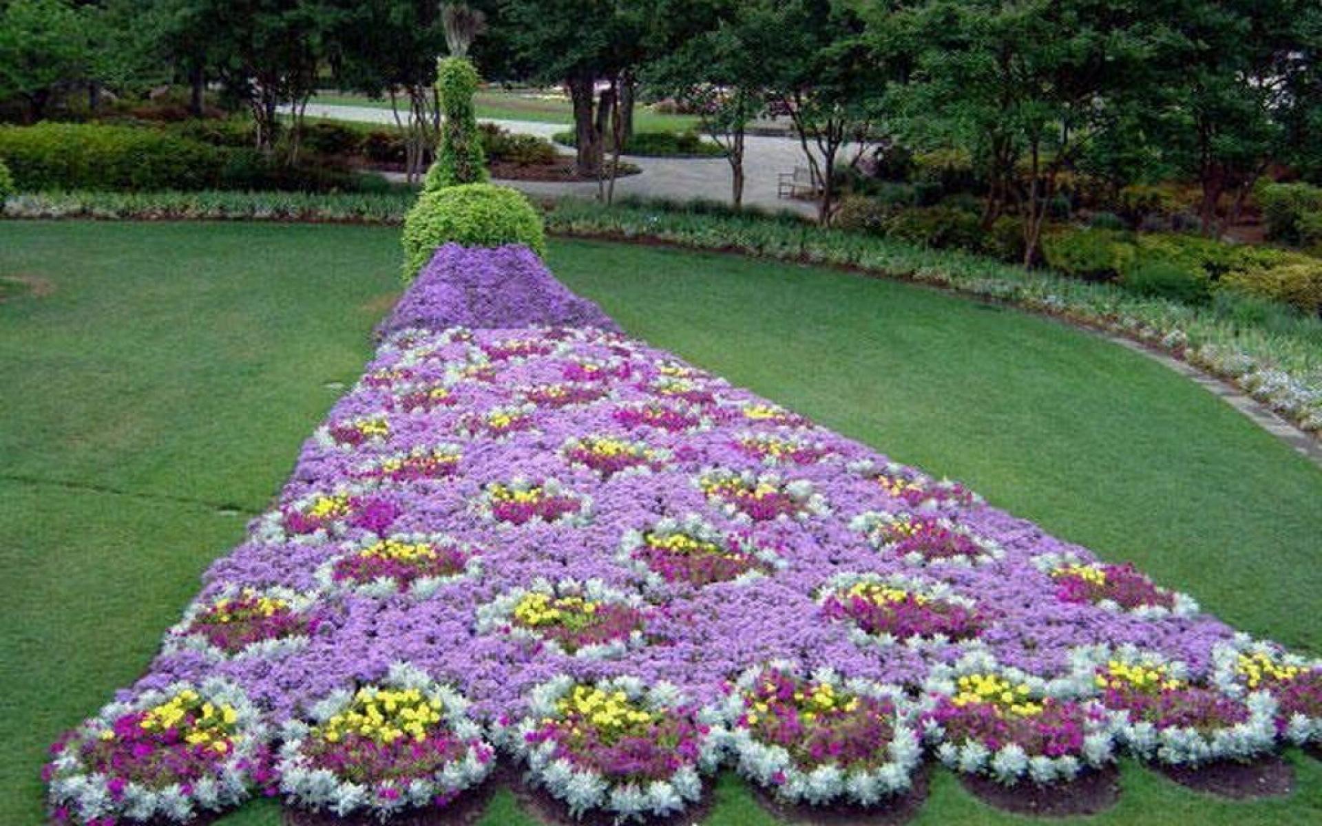 Виды цветов названия и фото на клумбу