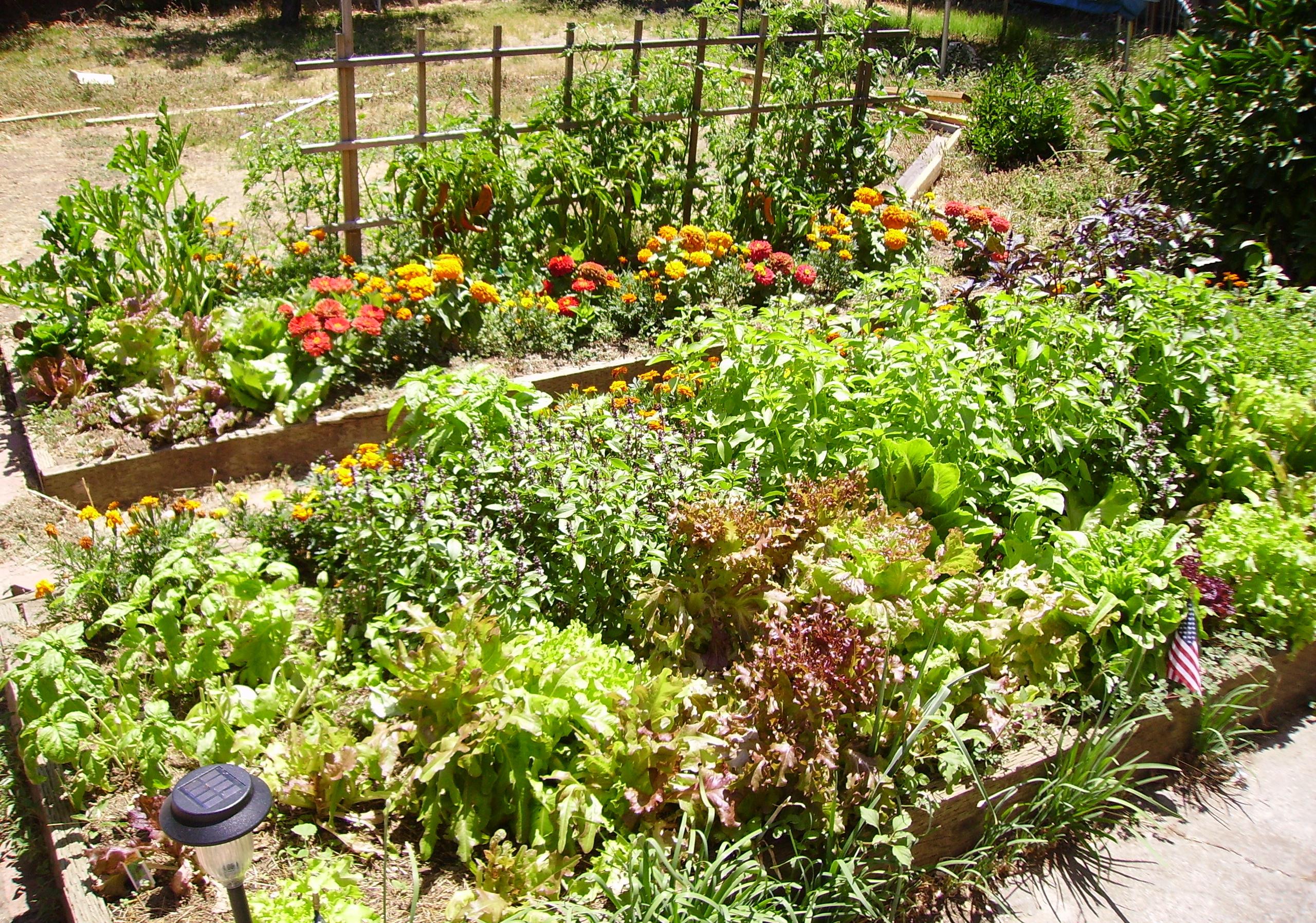 Облагораживаем огород своими руками 374
