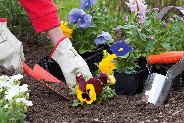 Как мы сажали цветы в городе 79