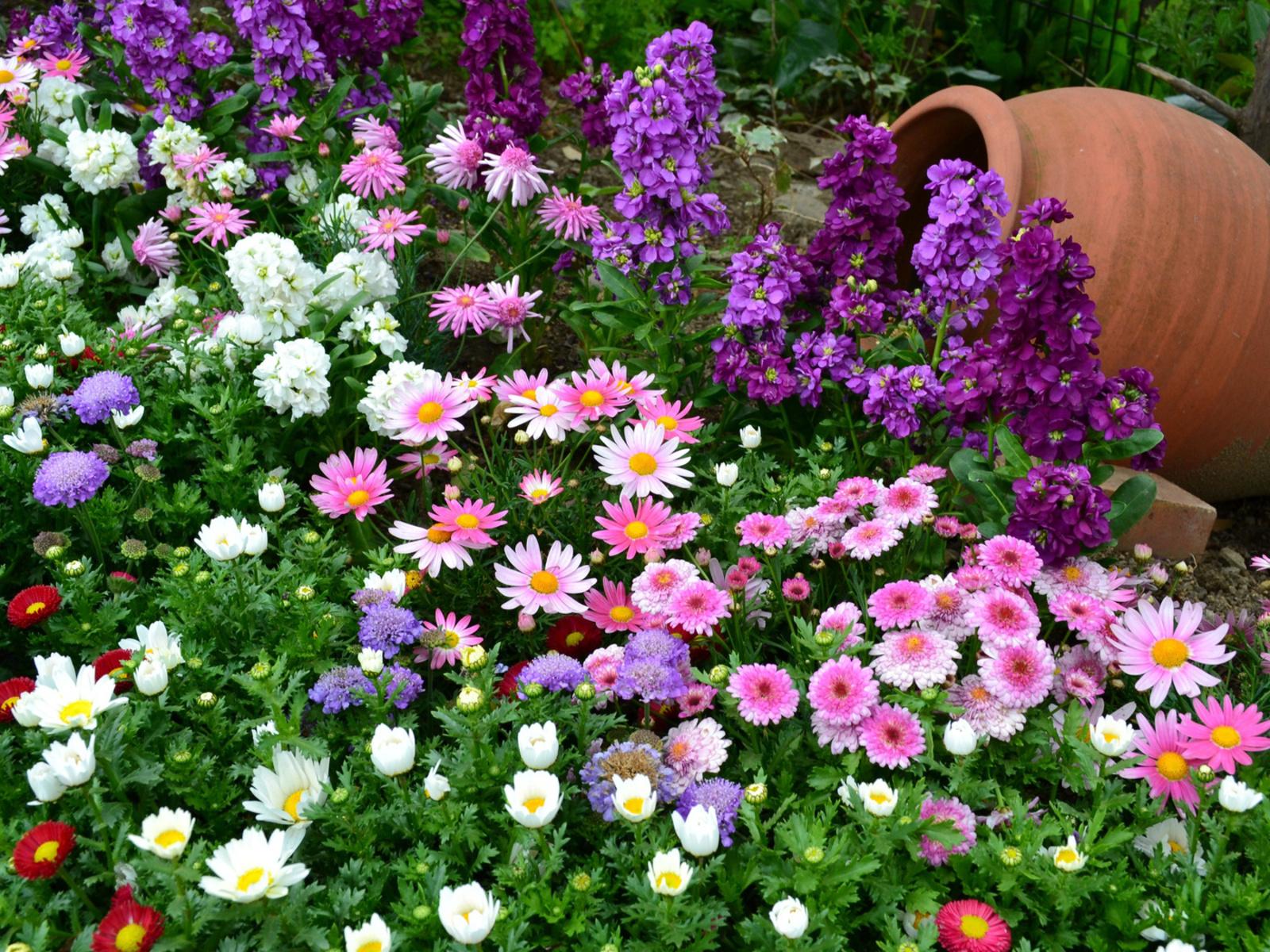 Цветочные клумбы с цветами фото с названием цветов