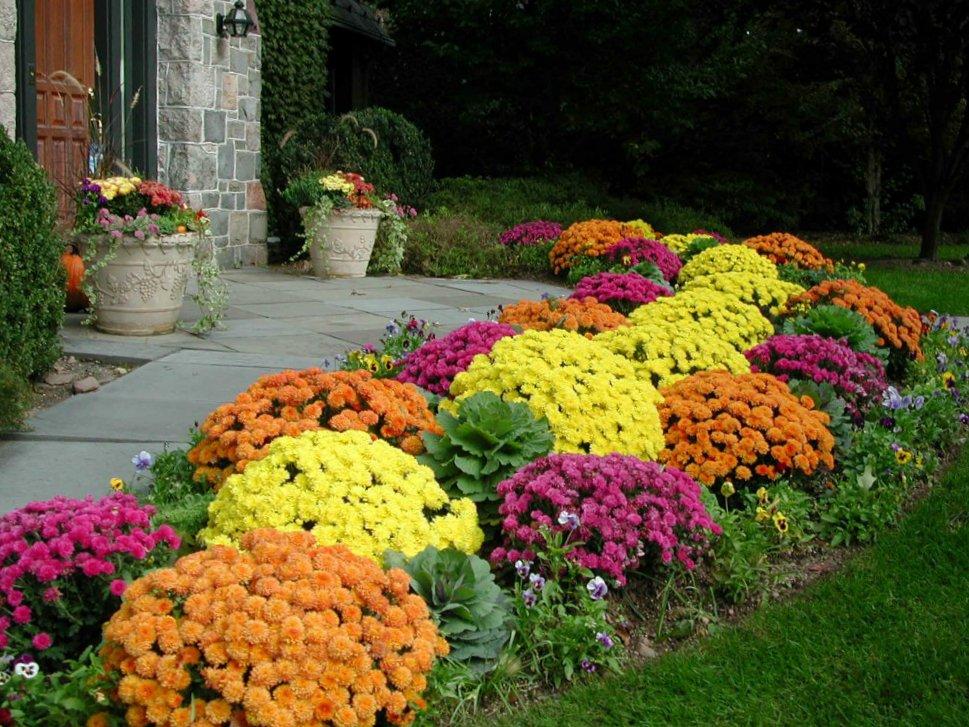 Когда сажать цветы что все лето цветут 227