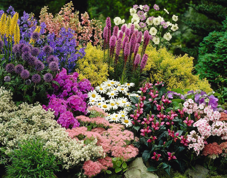 Низкорослые осенние цветы для клумбы