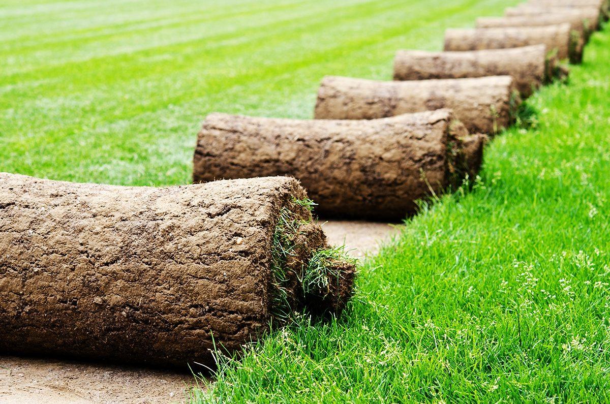 Технология укладки и правила выращивания рулонного газона