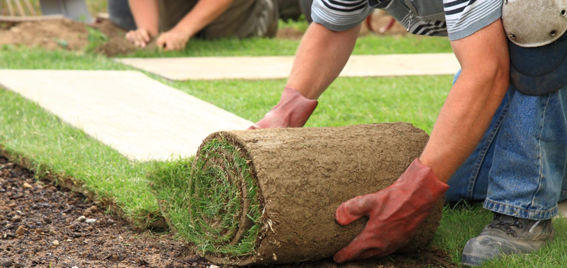 Технология выращивания рулонный газон 67