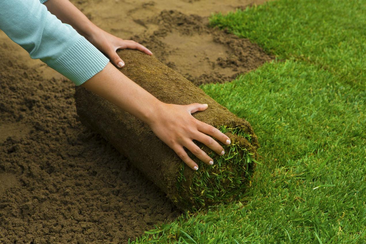 Как правильно положить рулонный газон своими руками