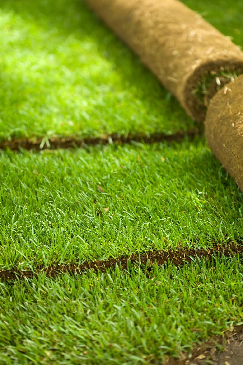 Как укладывать рулонный газон самостоятельно. Красивые интерьеры и дизайн
