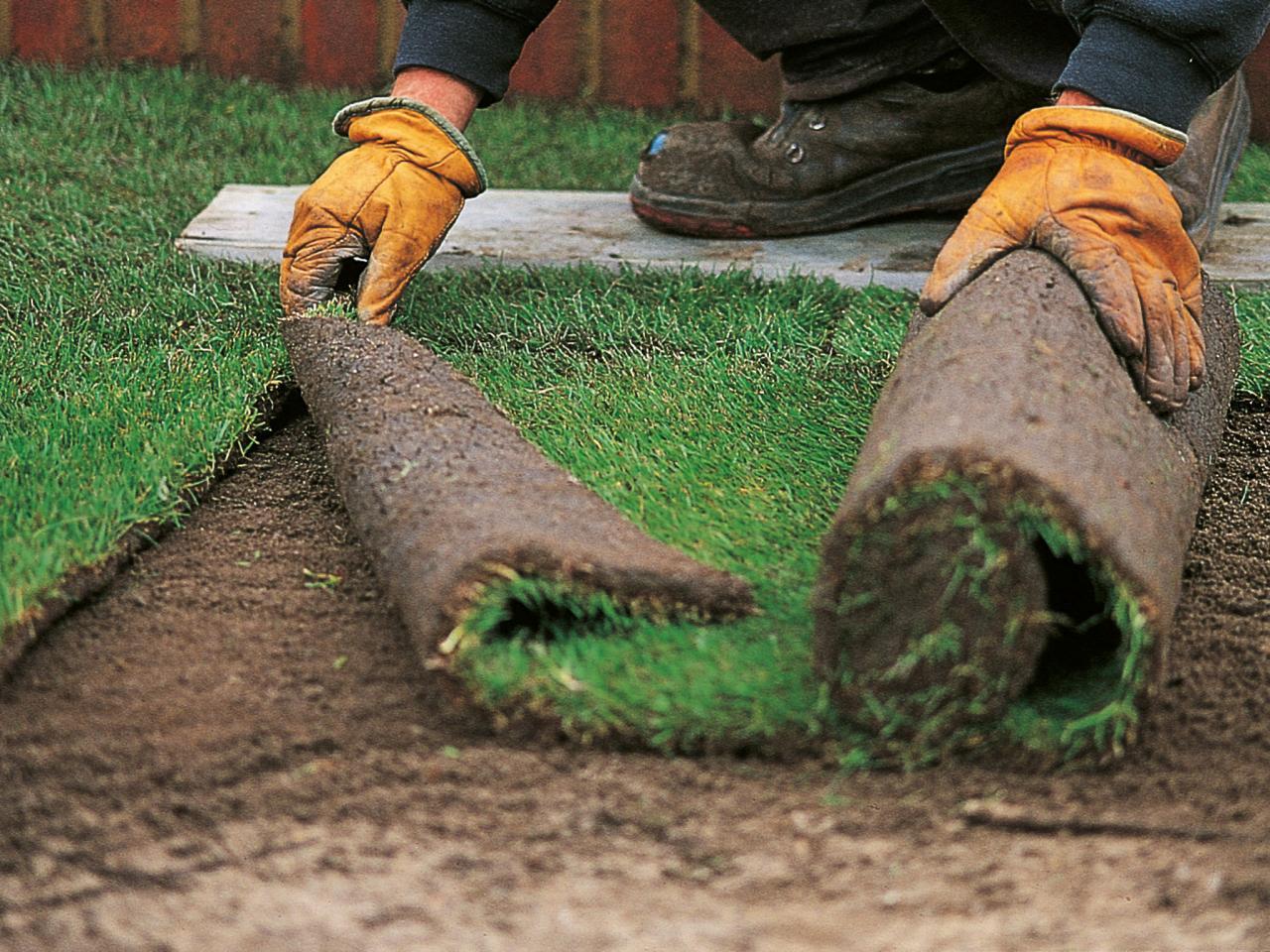 Как сажать газон своими руками 62