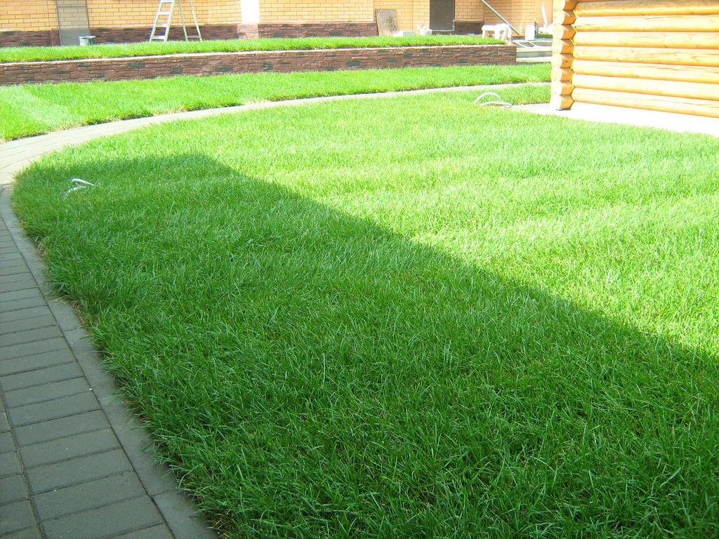 Универсальный газон своими руками 26