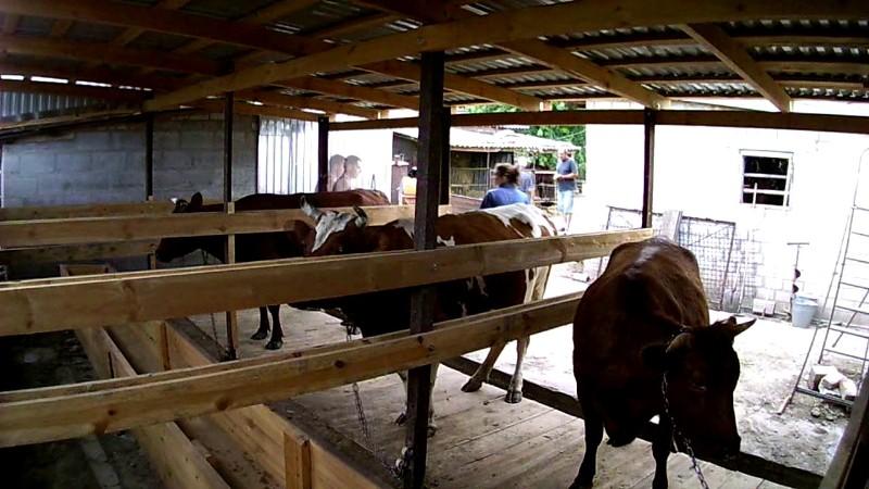 стойло для быков своими руками фото чем