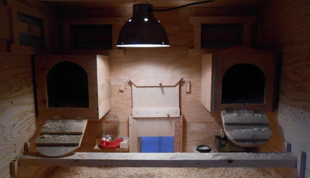 Обогрев курятника зимой - инфракрасные лампы, утепление зимой дешевыми методами, греющий кабель, печь и другие
