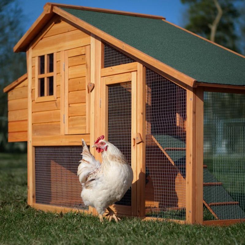 Свет в курятнике (34 фото): обустройство насестов внутри с гнездами и поилками своими руками, оптимальный размер лаза для кур