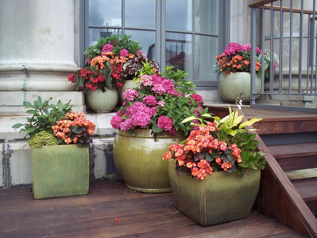 Цветы в сад на заказ, букеты для