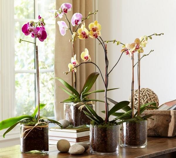 Плошка для орхидеи