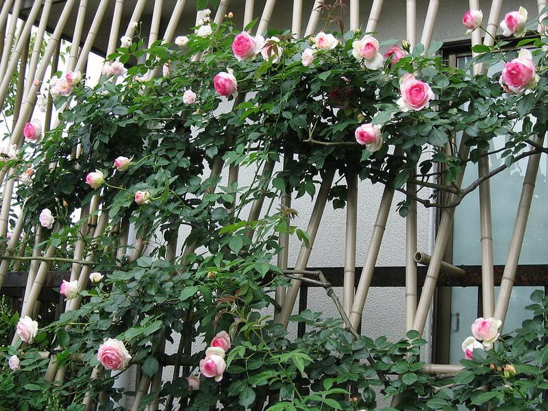Каркасы для плетистых роз своими руками фото 45