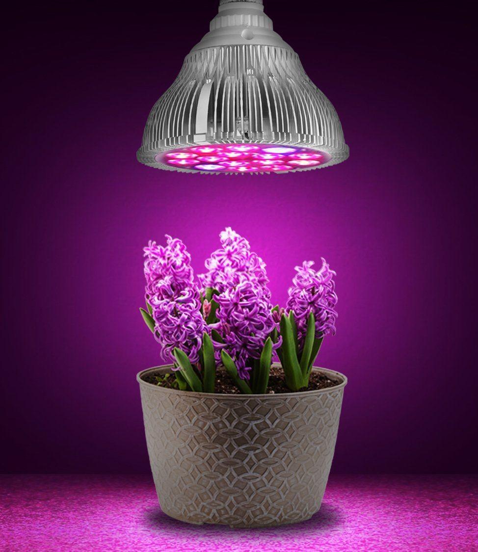 Фитолампа для растений дома
