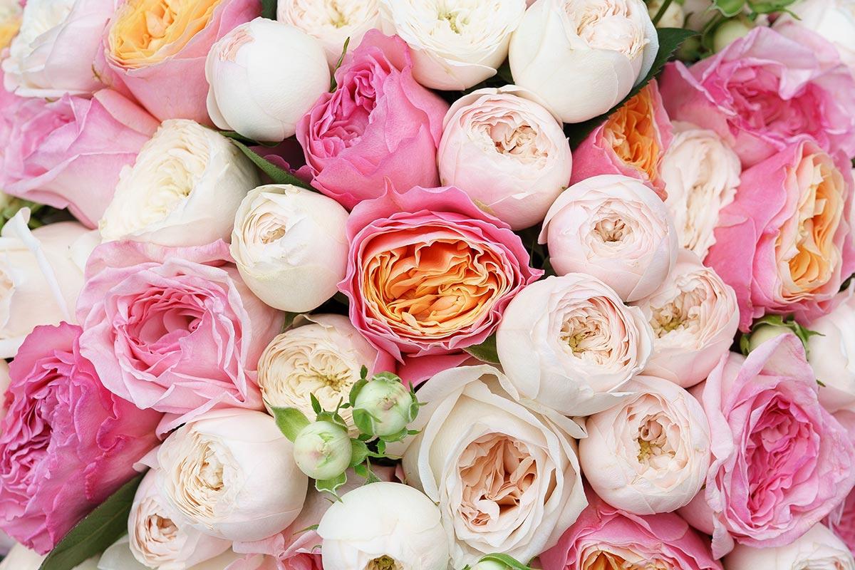пионные розы фото хотя старой