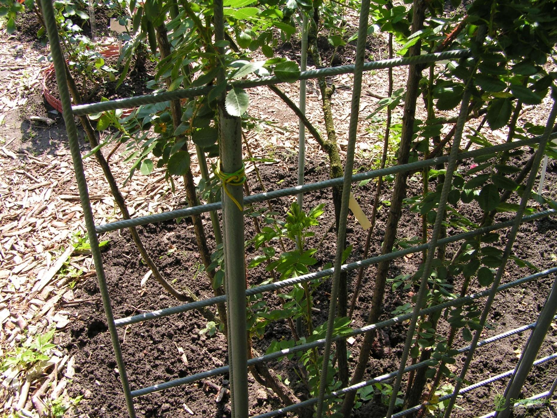 опоры для вьющихся роз фото саду замка хиллсборо