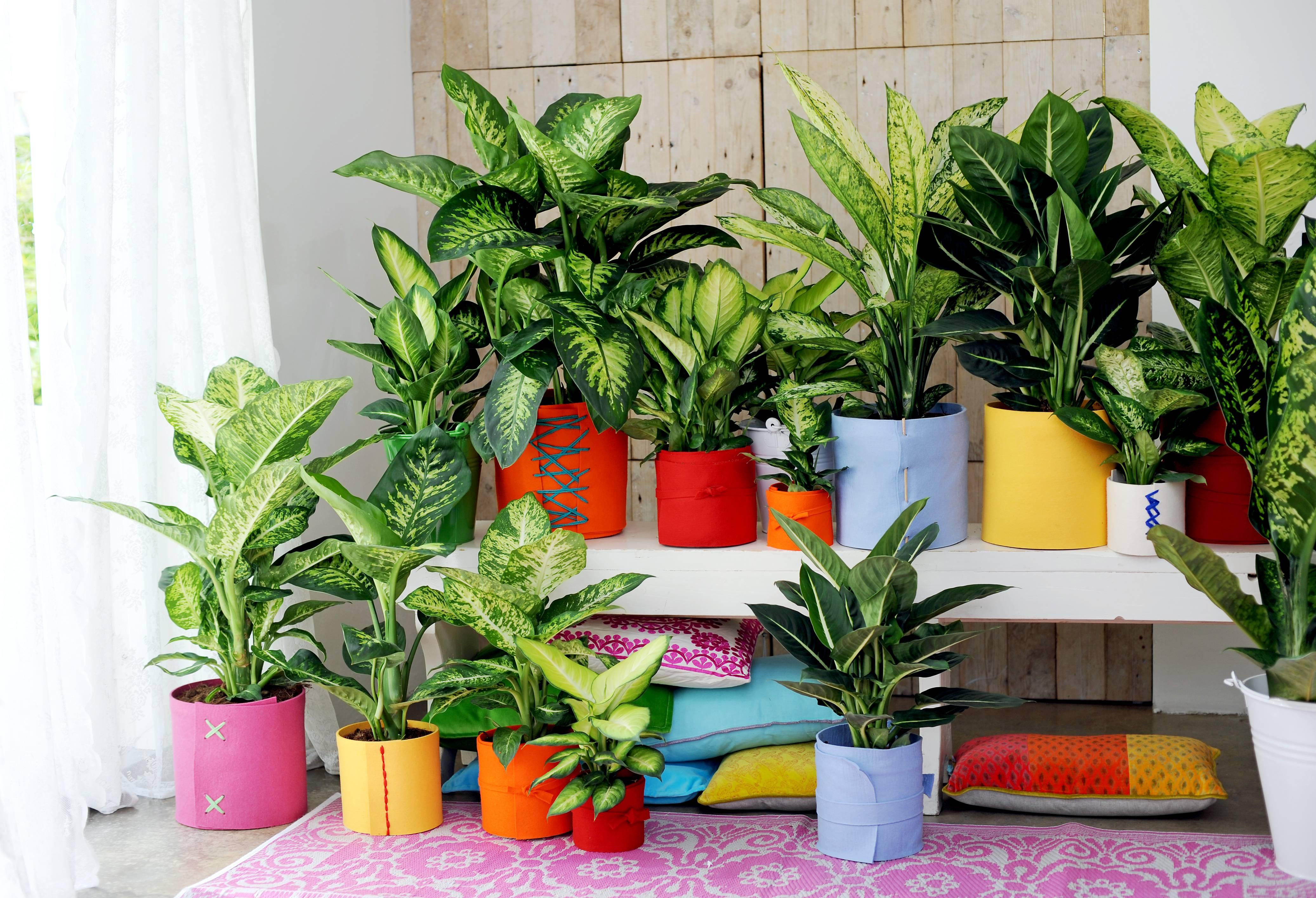 необычным полезные цветы для квартиры с фото поможет вам