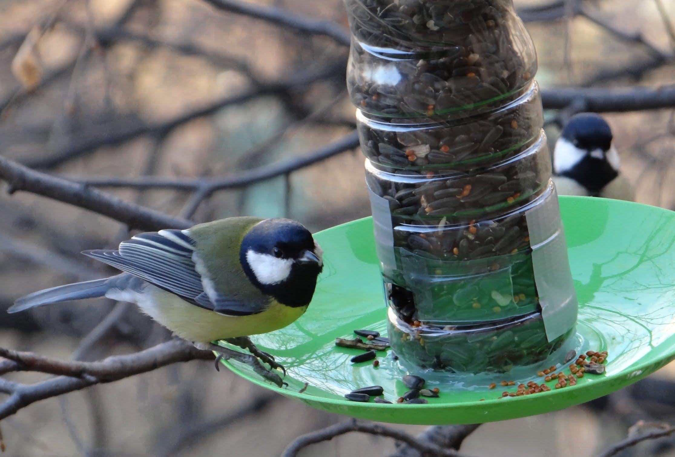Кормушка для птиц своими руками видео фото 515