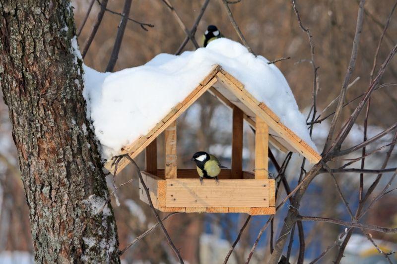 Как декорировать кормушку для птиц. Мастер-класс по декупажу на дереве: Кормушка для птиц