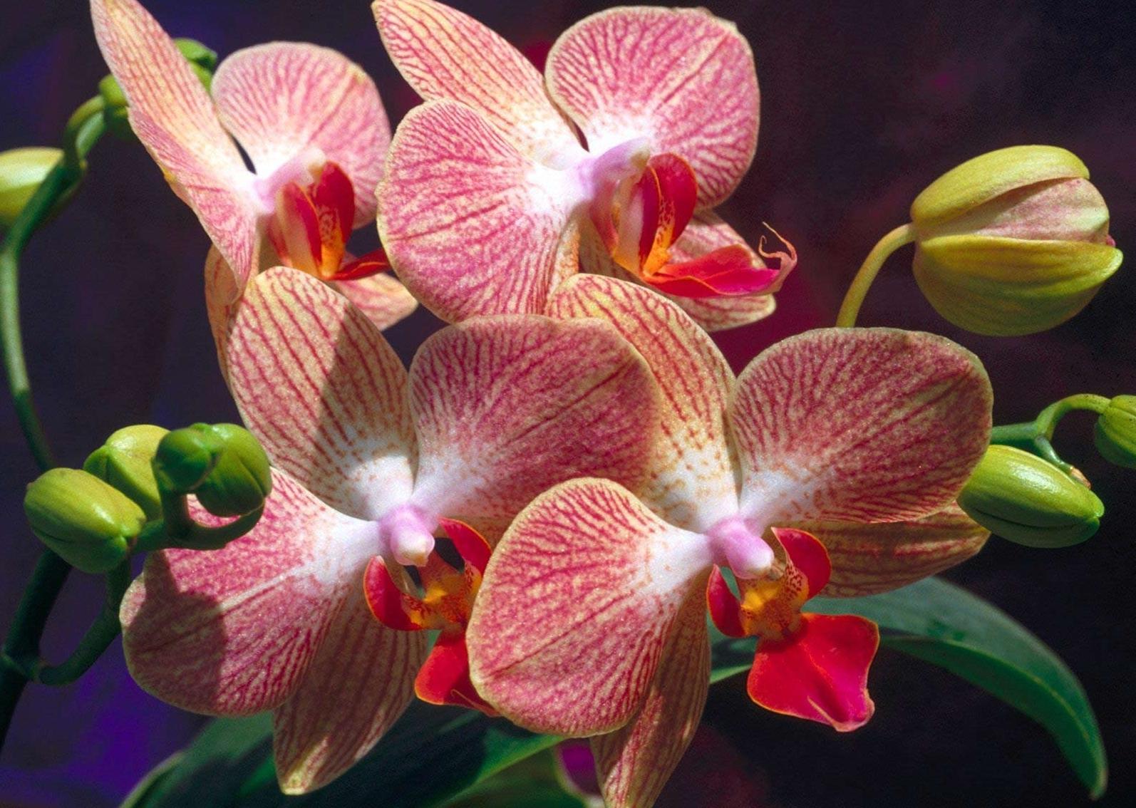 Что делать, если у орхидеи корни растут вверх и почему это происходит?