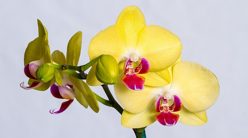 Белые жучки на орхидее как избавиться — Все цветы