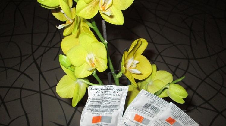 Янтарная кислота для орхидей в таблетках