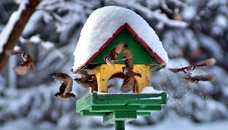 Что можно давать птицам в кормушку зимой. Можно ли кормить воробьёв и других птиц белым хлебом? Можно ли кормить птиц зимой в кормушке сухарями, хлебом, свежим салом
