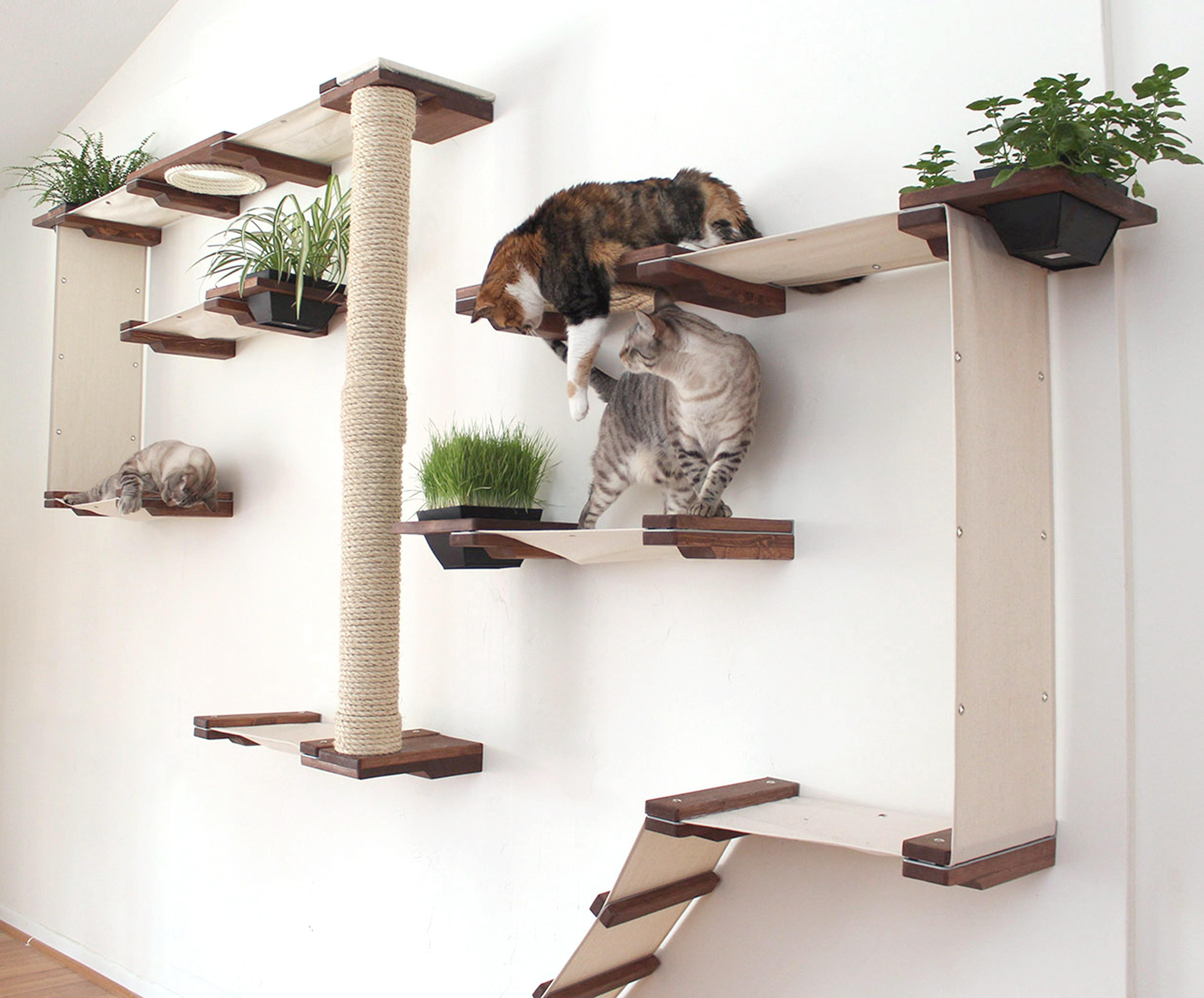 Игровые комплексы для кошек своими руками с чертежами фото 565