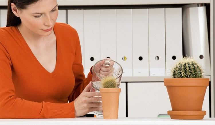 Как ухаживать за кактусом в домашних условиях как часто поливать видео