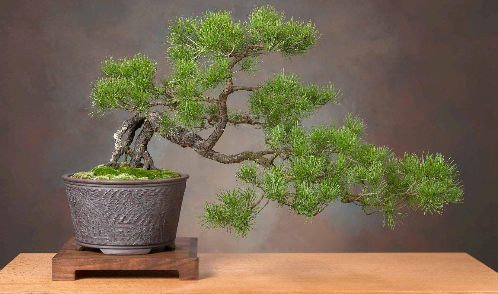 Японское дерево своими руками фото 394