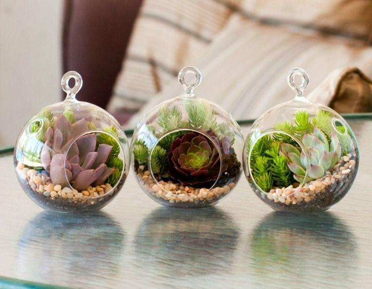Что можно посадить в стеклянную вазу