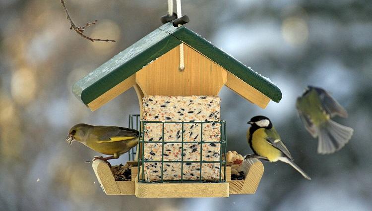 Кормушки для птиц своими руками размеры чертежи