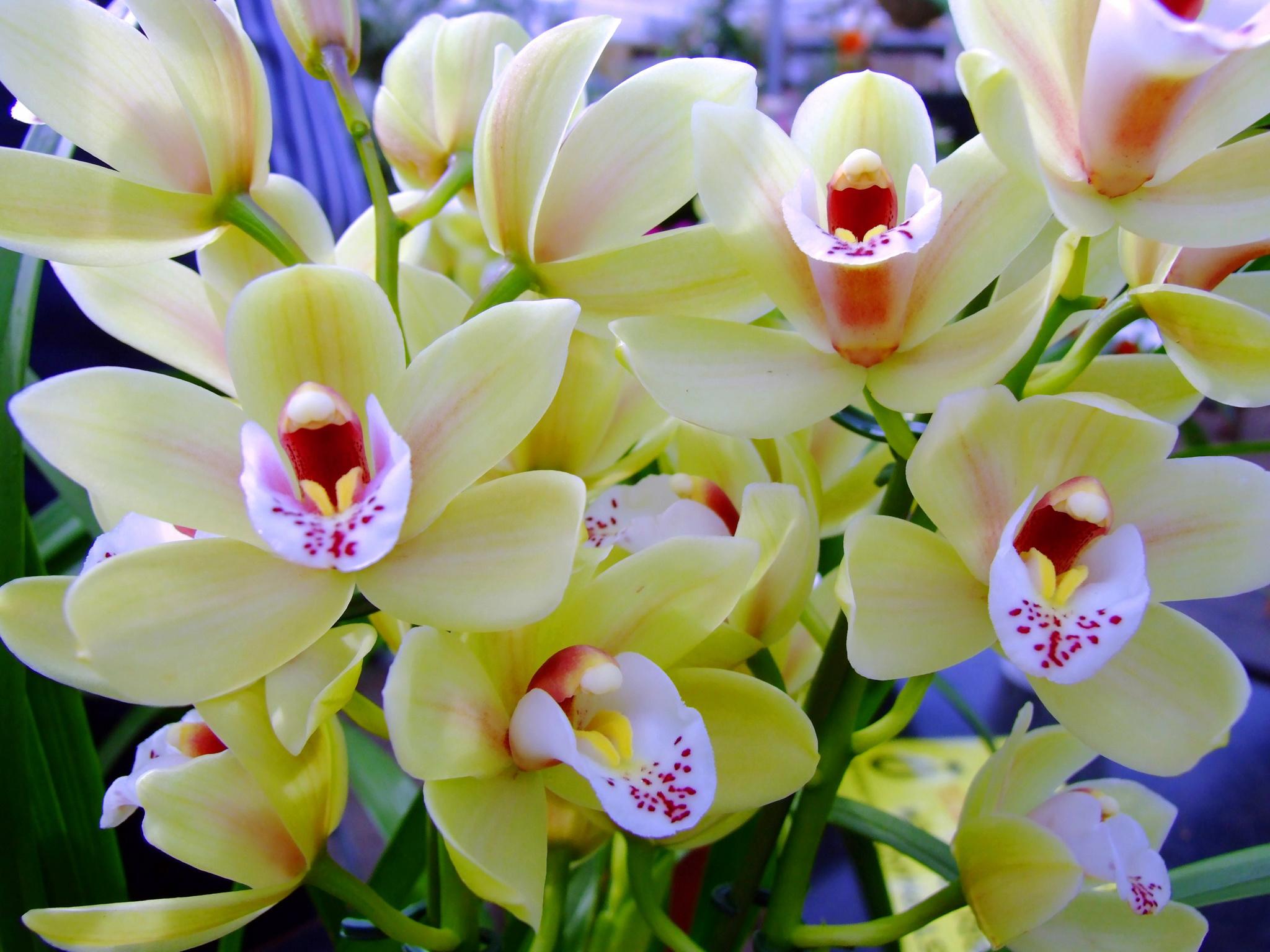 Как понять что орхидея будет цвести