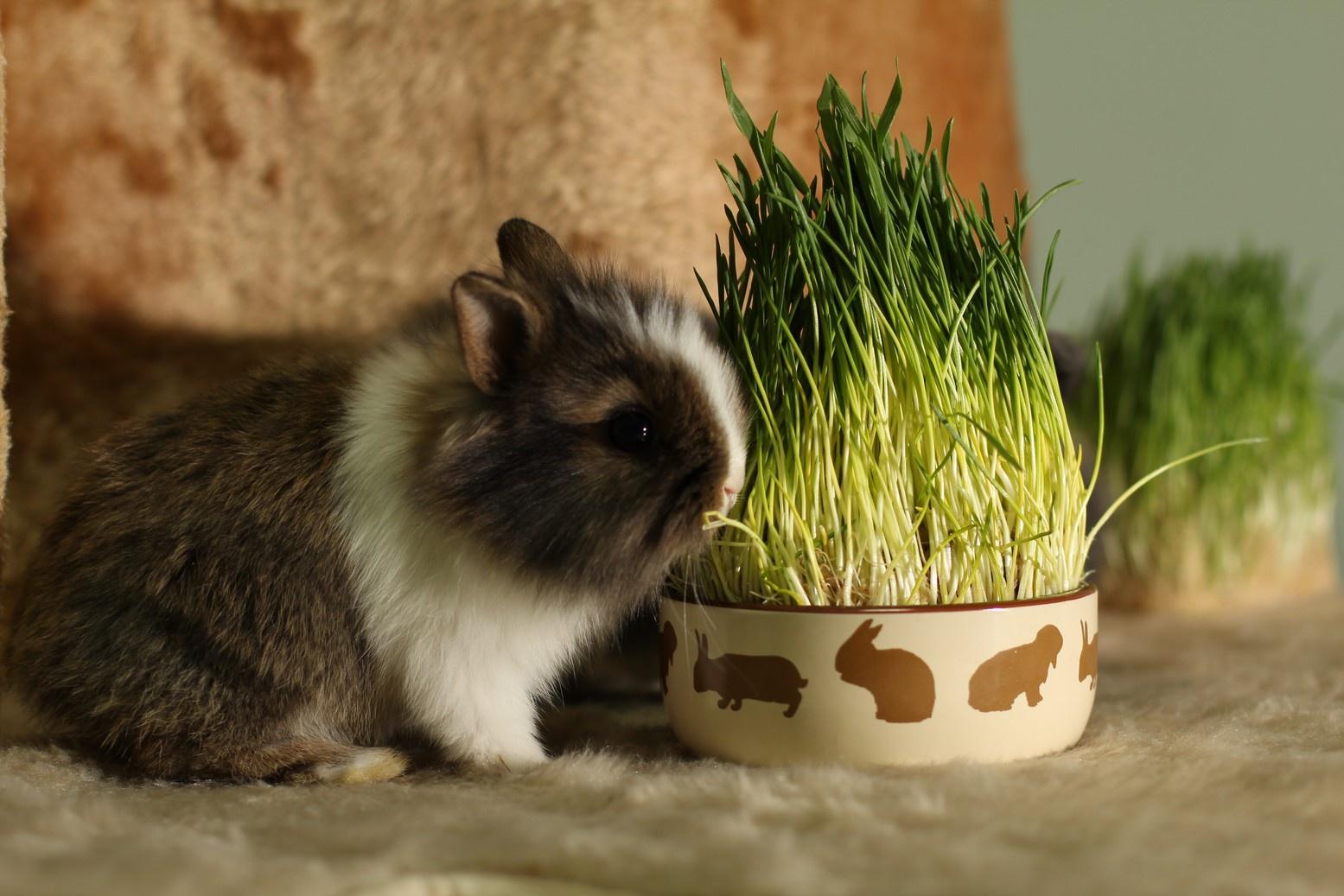 Чем можно кормить декоративного кролика: грубые и сочные корма