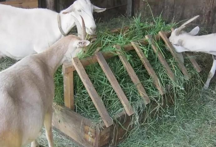 Как сделать кормушку для козы своими руками?