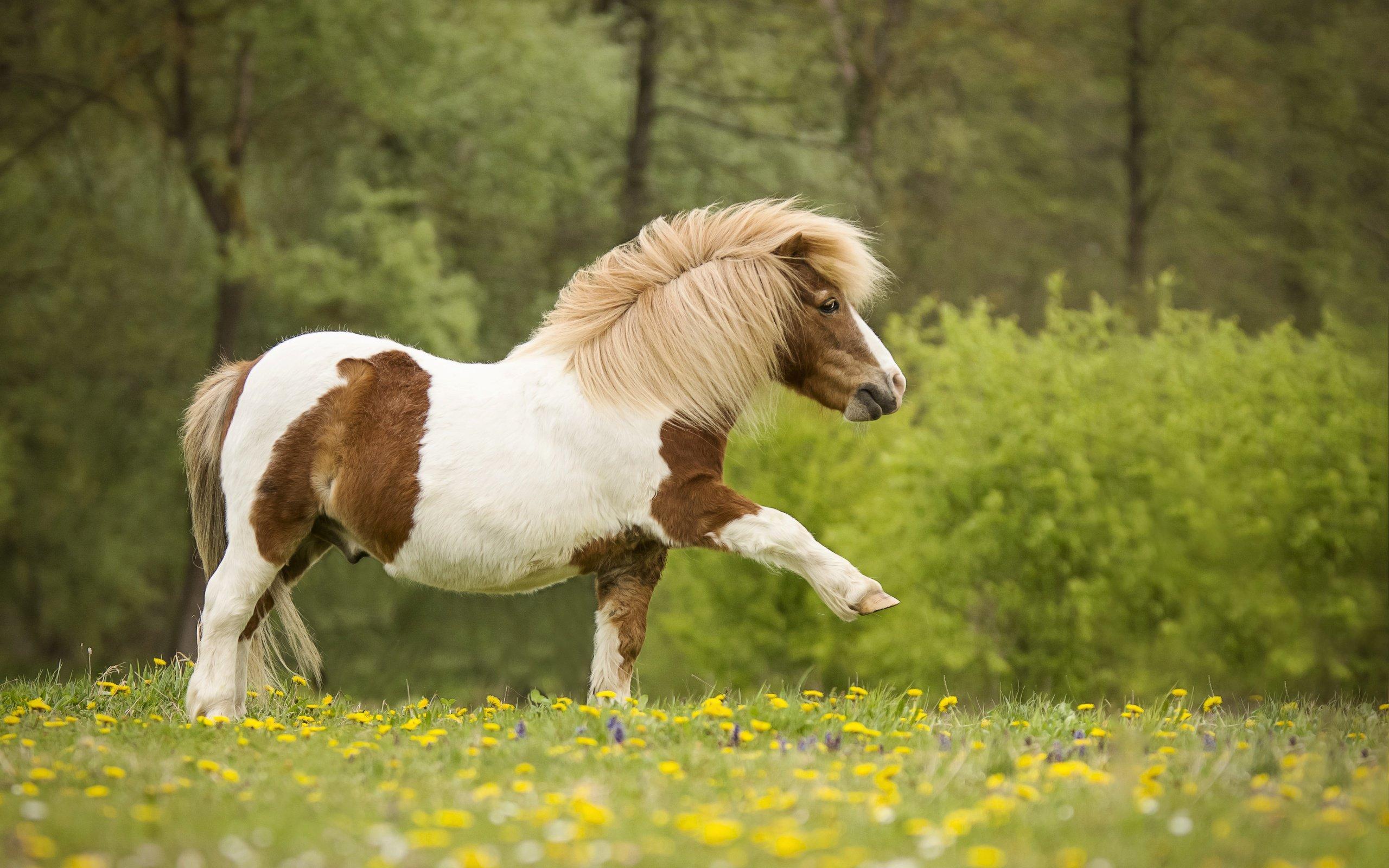 Лошади картинки с пони