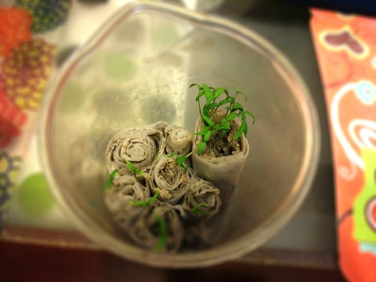 посев семян в улитку