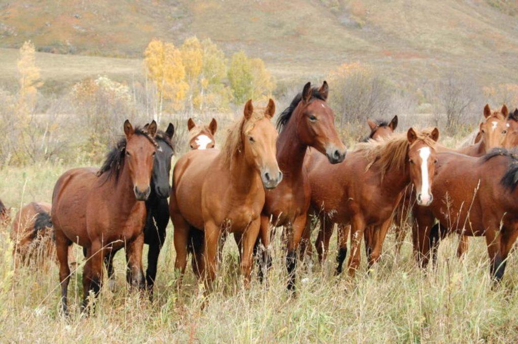 Породистая лошадь на Руси, 7 букв, сканворд