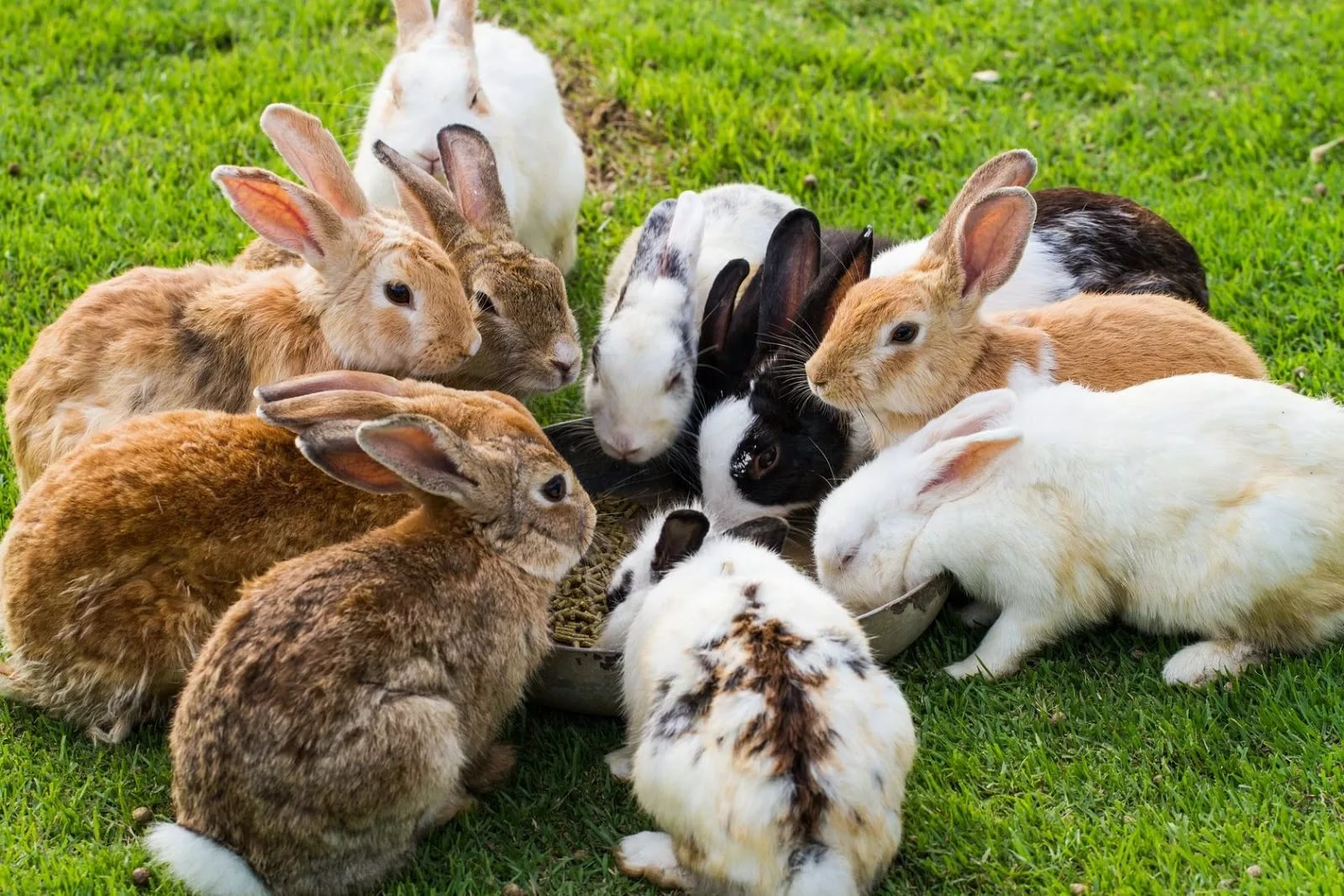 Средняя продолжительность жизни декоративного кролика