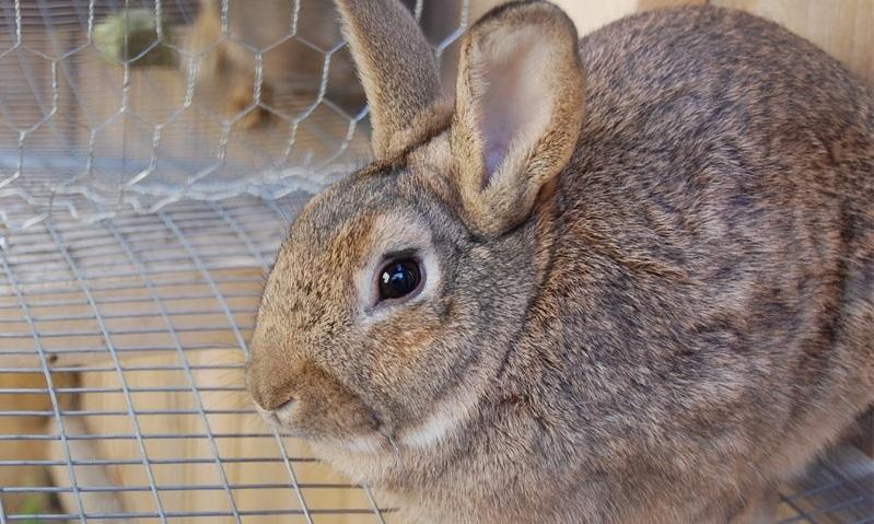 Рождение крольчат зимой