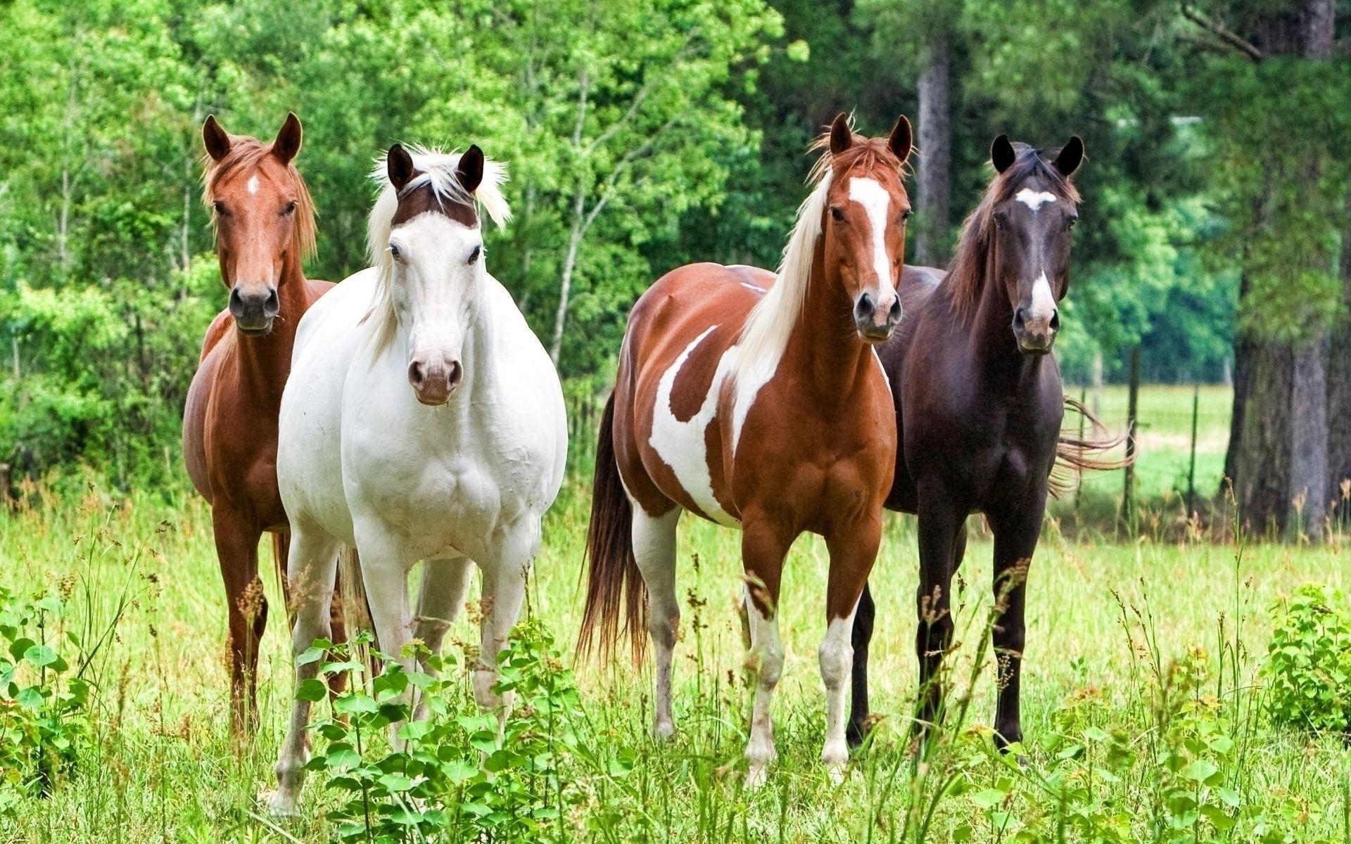 Рыжая лошадь: как называется, описание масти, подходящее имя, фото