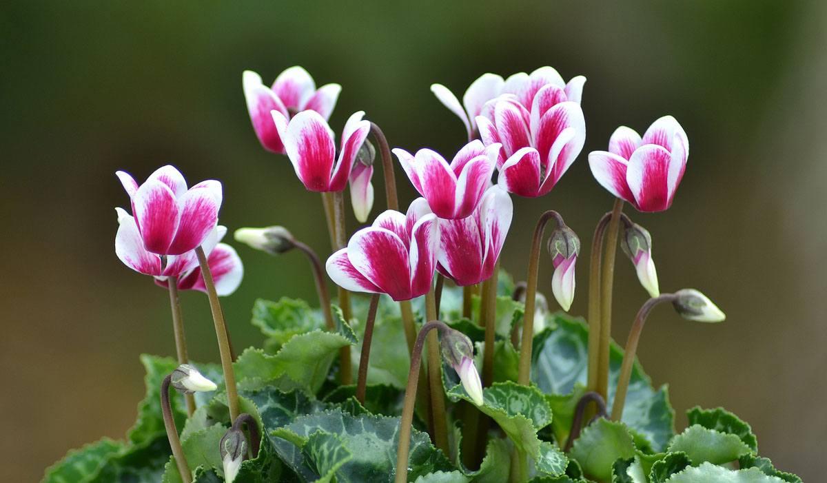 Движущиеся картинки для презентаций цветы изготовления вам