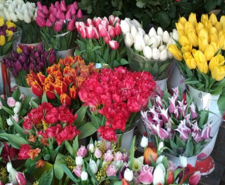 Выгонка тюльпанов в домашних условиях к 8 Марта когда высаживать видео