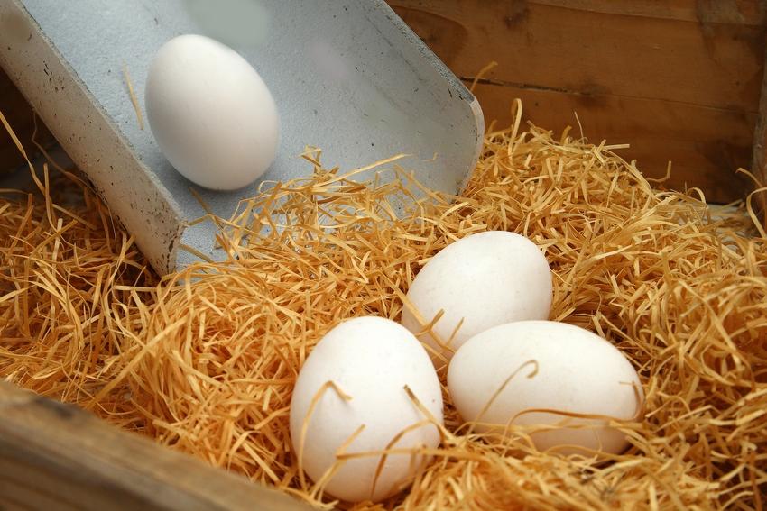 Как сделать гнезда для кур