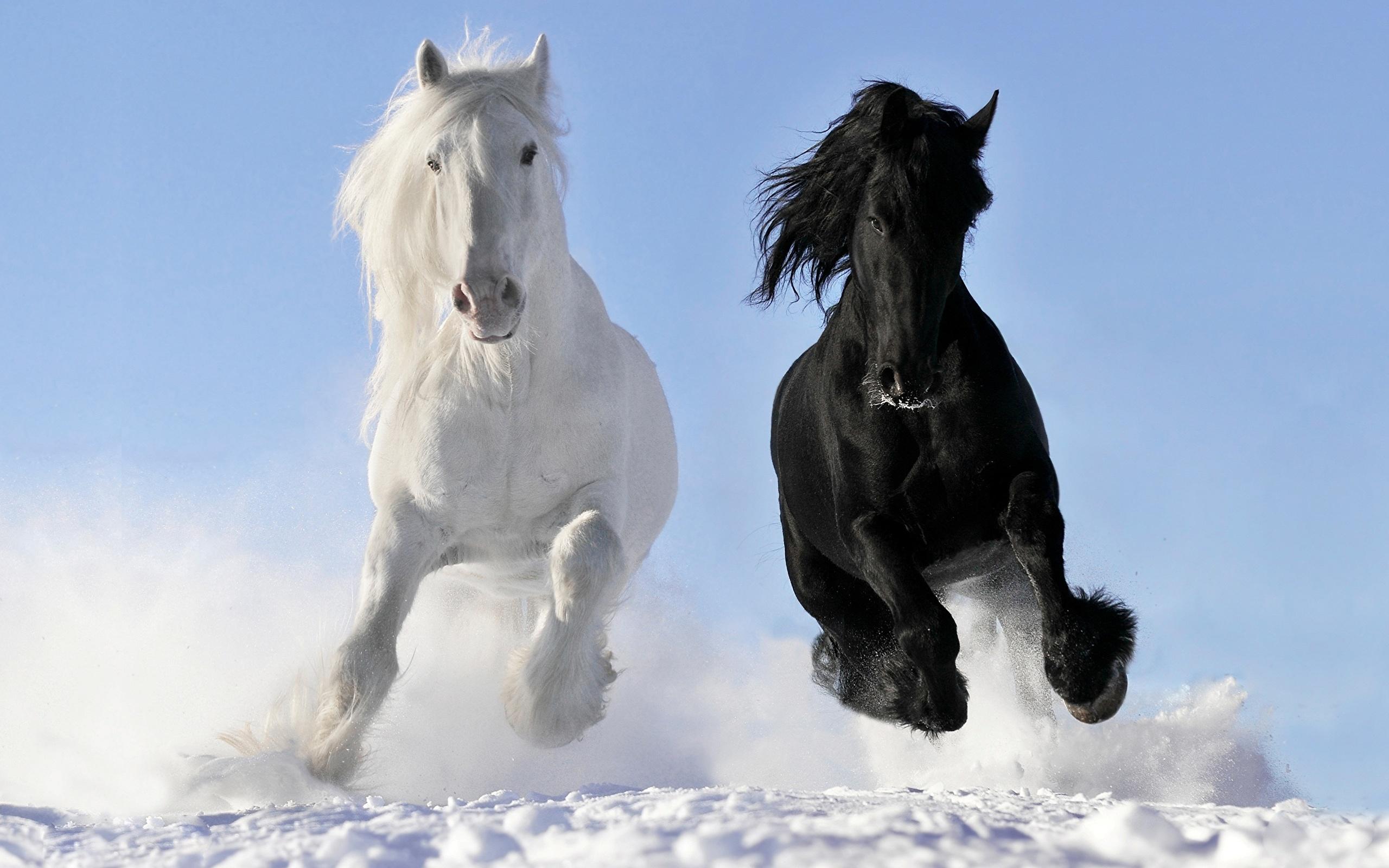 Лошадь характер животного
