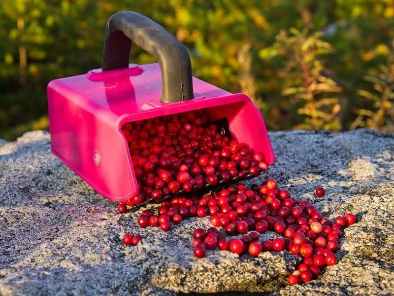 Картинка комбайн для сбора ягод