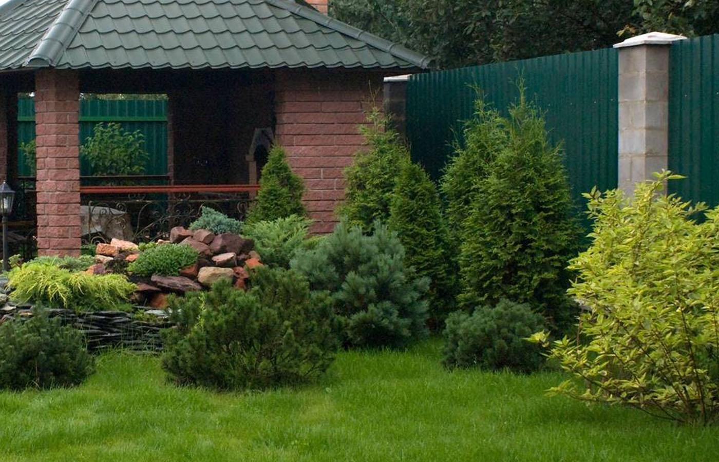 Посадка пихты: как правильно сажать ее от корня? Где посадить ее на участке? Можно ли сажать возле дома на даче?
