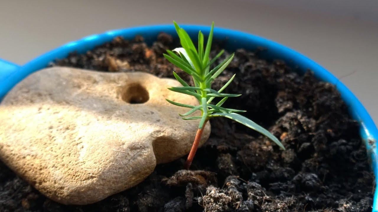 Как ускорить рост деревьев