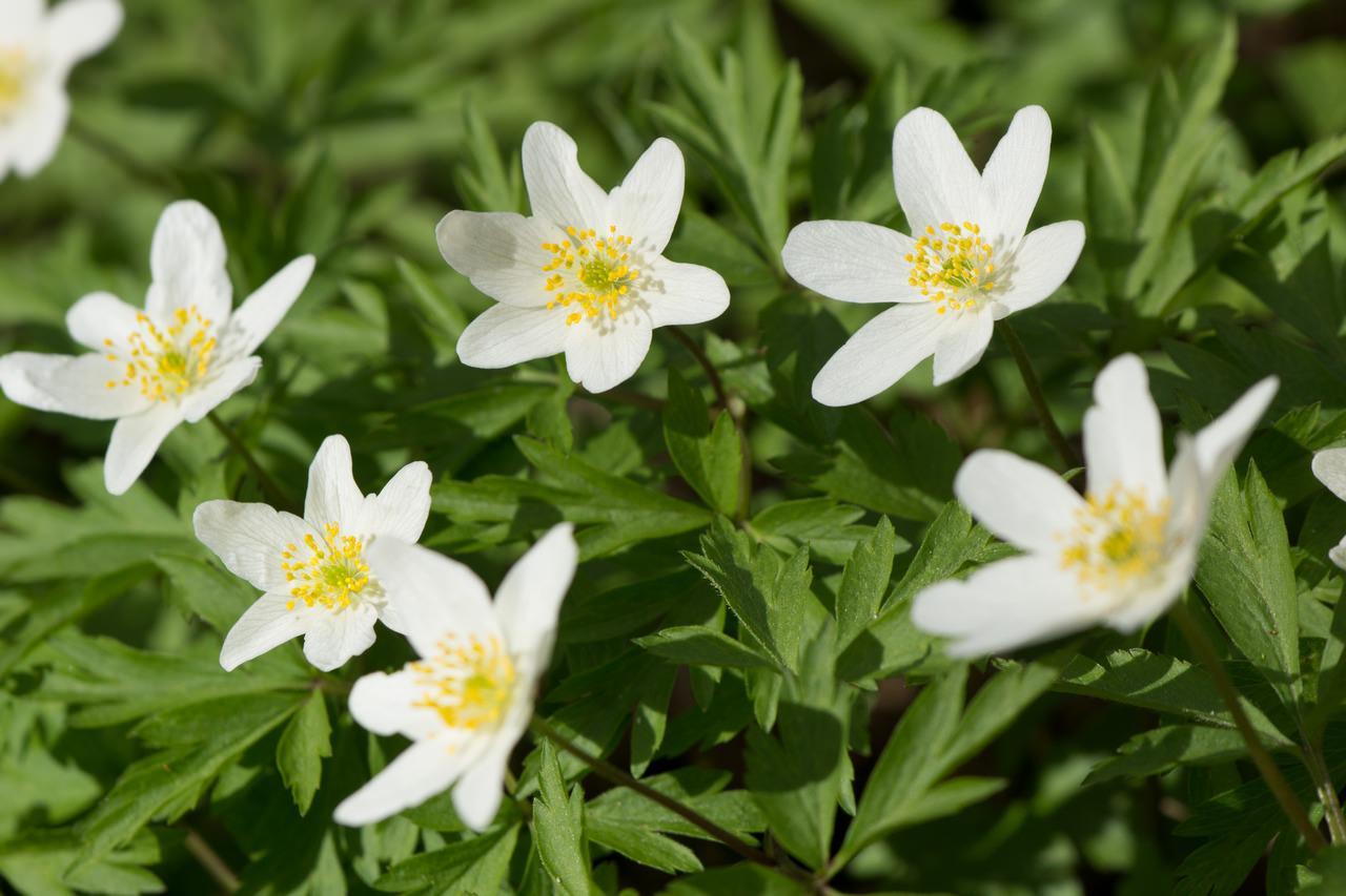 цветы похожие на подснежники название и фото